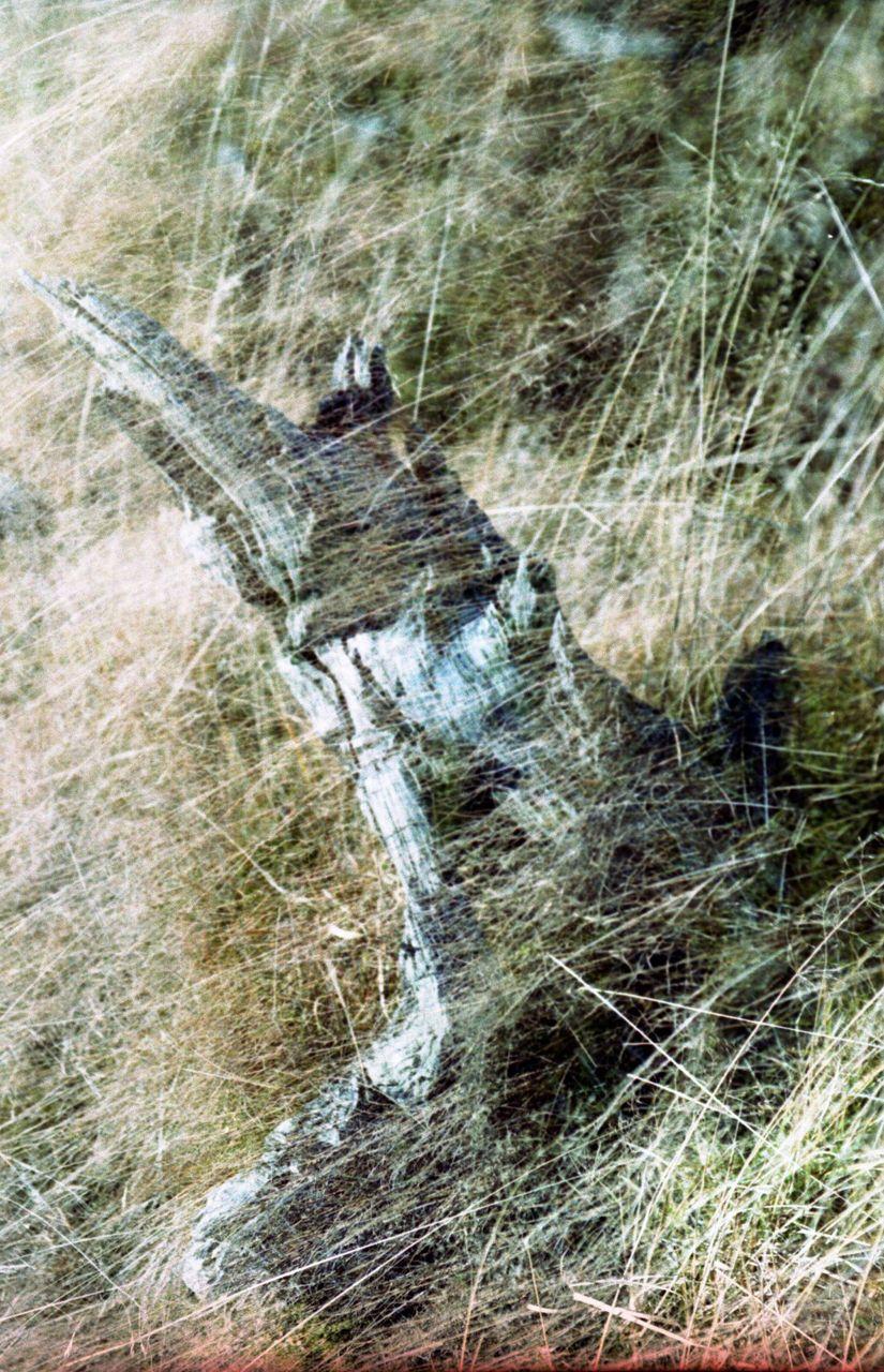 Adelina Cimochowicz Na góry, na łąki, na lasy
